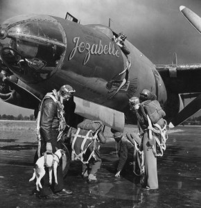 'Salvo' mascot of the 322nd Bomb Group boarding for mission! (FRE 1184)