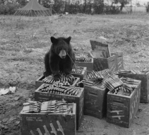 Roscoe Ann mascot of the 390th. Roscoe had free roam of the airbase at Parham - here she can be seen sitting on ammunition boxes. (FRE 1560)